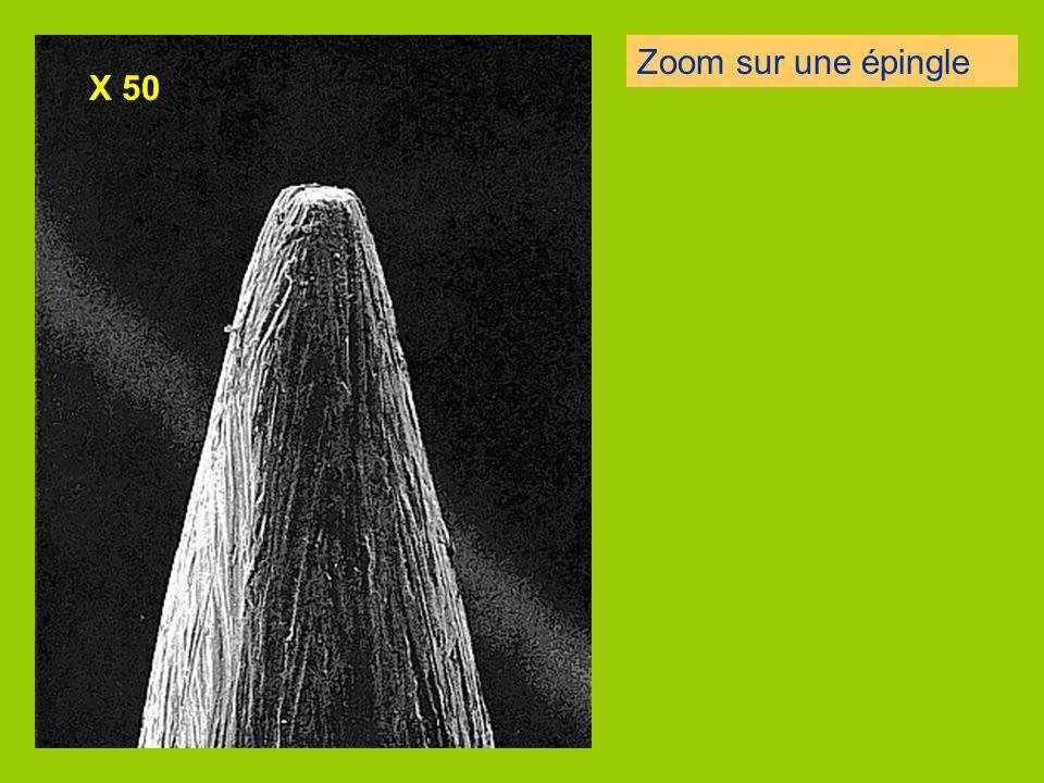 Les organismes vivants peuvent être MULTICELLULAIRE : plusieurs cellules. (Pluricellulaire) ou UNICELLULAIRE: une seule cellule