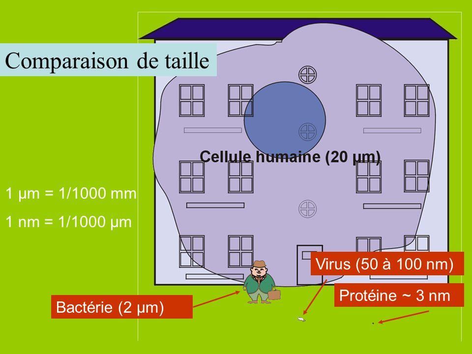 Bactérie (2 µm) Virus (50 à 100 nm) Protéine ~ 3 nm 1 µm = 1/1000 mm 1 nm = 1/1000 µm Comparaison de taille