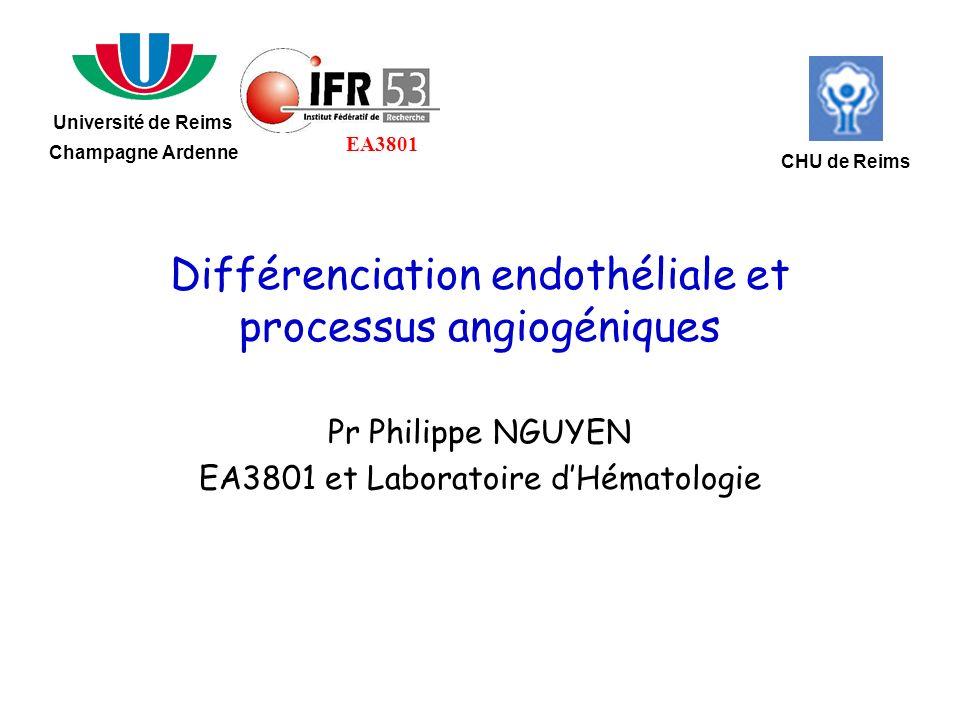 Différenciation endothéliale et processus angiogéniques Pr Philippe NGUYEN EA3801 et Laboratoire dHématologie Université de Reims Champagne Ardenne CH