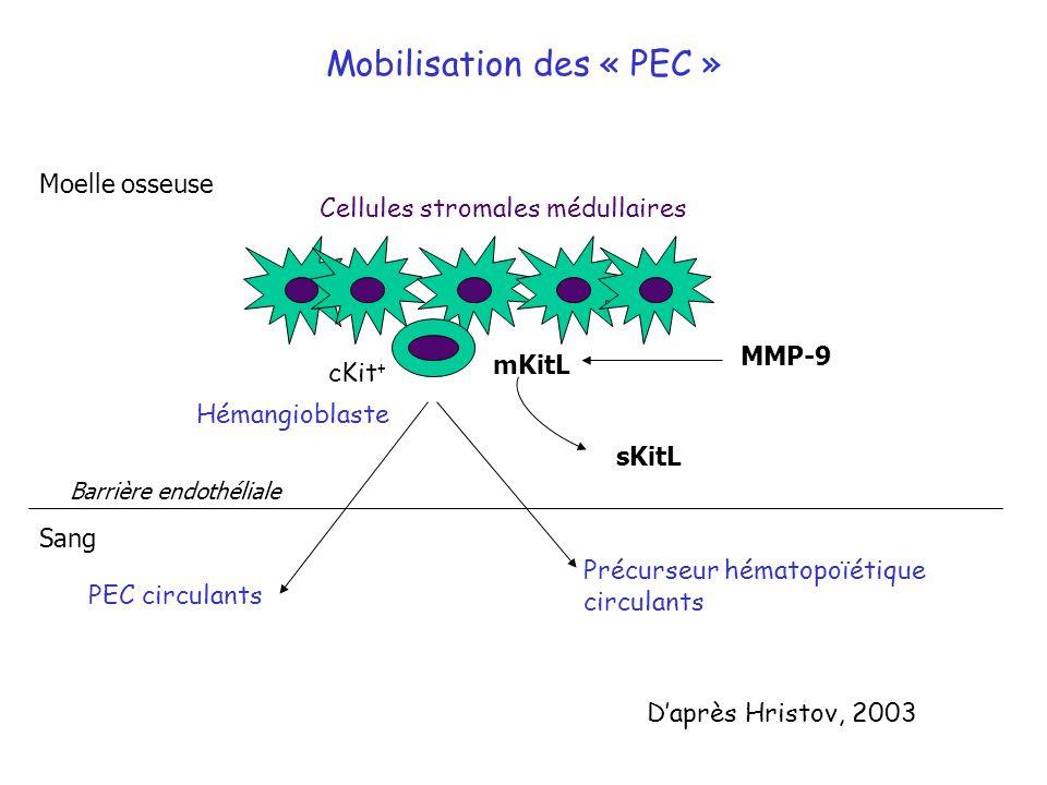 Mobilisation des « PEC » Cellules stromales médullaires Hémangioblaste cKit + PEC circulants Précurseur hématopoïétique circulants mKitL MMP-9 sKitL M