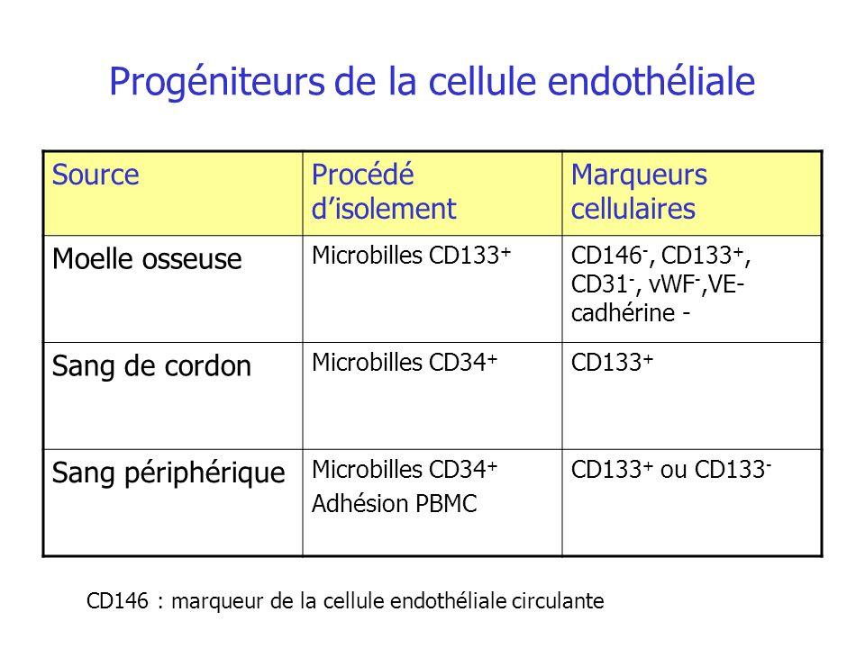 Progéniteurs de la cellule endothéliale SourceProcédé disolement Marqueurs cellulaires Moelle osseuse Microbilles CD133 + CD146 -, CD133 +, CD31 -, vW