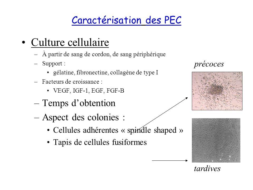 Caractérisation des PEC Culture cellulaire –À partir de sang de cordon, de sang périphérique –Support : gélatine, fibronectine, collagène de type I –F