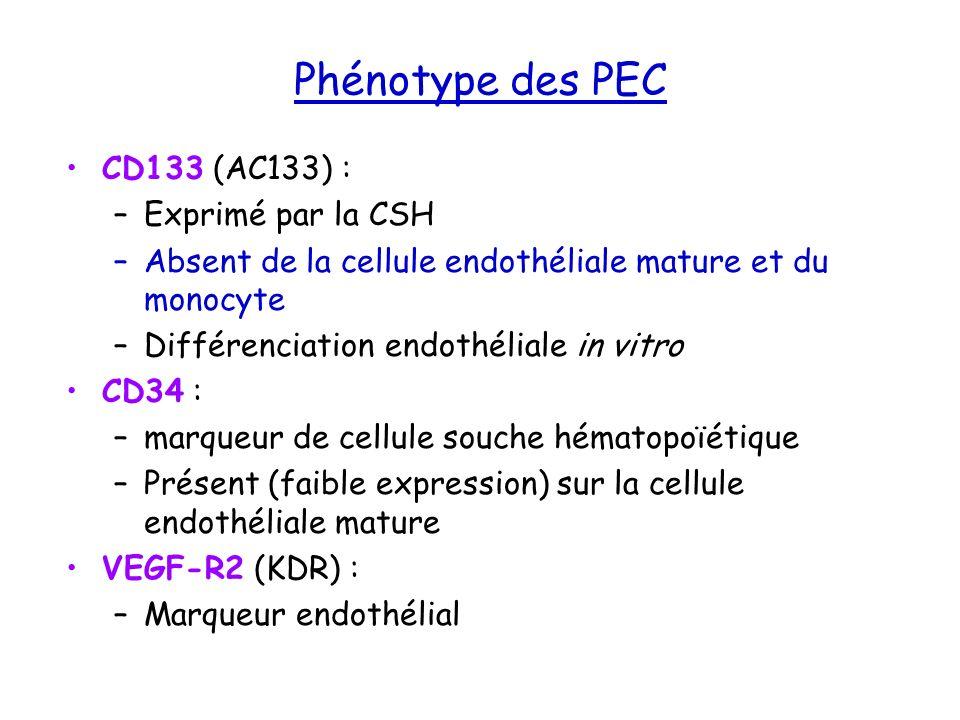 Phénotype des PEC CD133 (AC133) : –Exprimé par la CSH –Absent de la cellule endothéliale mature et du monocyte –Différenciation endothéliale in vitro