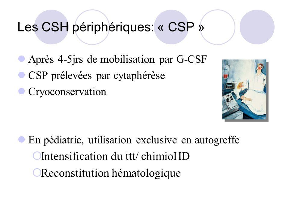 Les CSH périphériques: « CSP » Après 4-5jrs de mobilisation par G-CSF CSP prélevées par cytaphérèse Cryoconservation En pédiatrie, utilisation exclusi