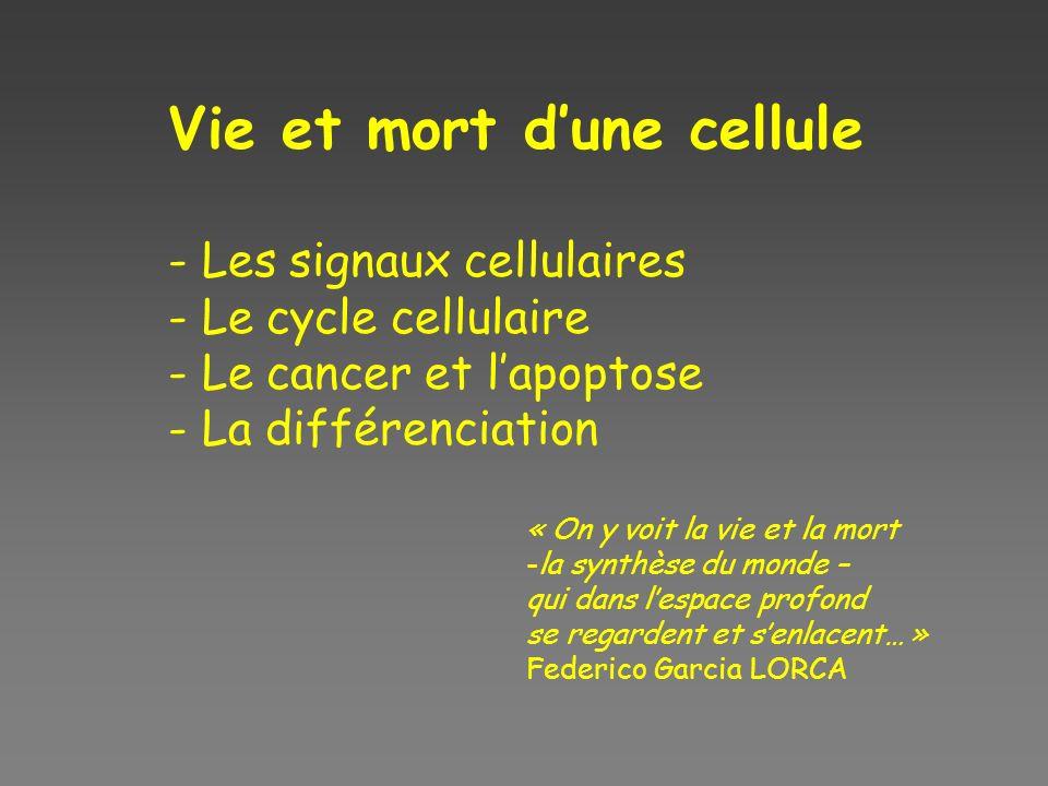 Vie et mort dune cellule - Les signaux cellulaires - Le cycle cellulaire - Le cancer et lapoptose - La différenciation « On y voit la vie et la mort -
