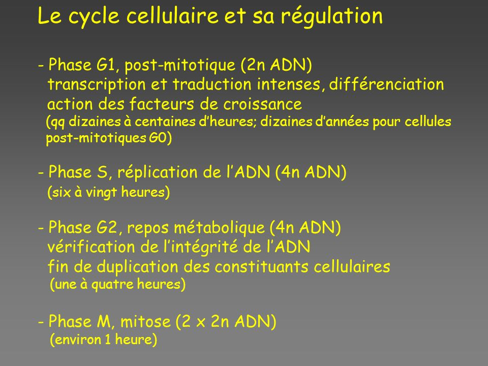Le cycle cellulaire et sa régulation - Phase G1, post-mitotique (2n ADN) transcription et traduction intenses, différenciation action des facteurs de