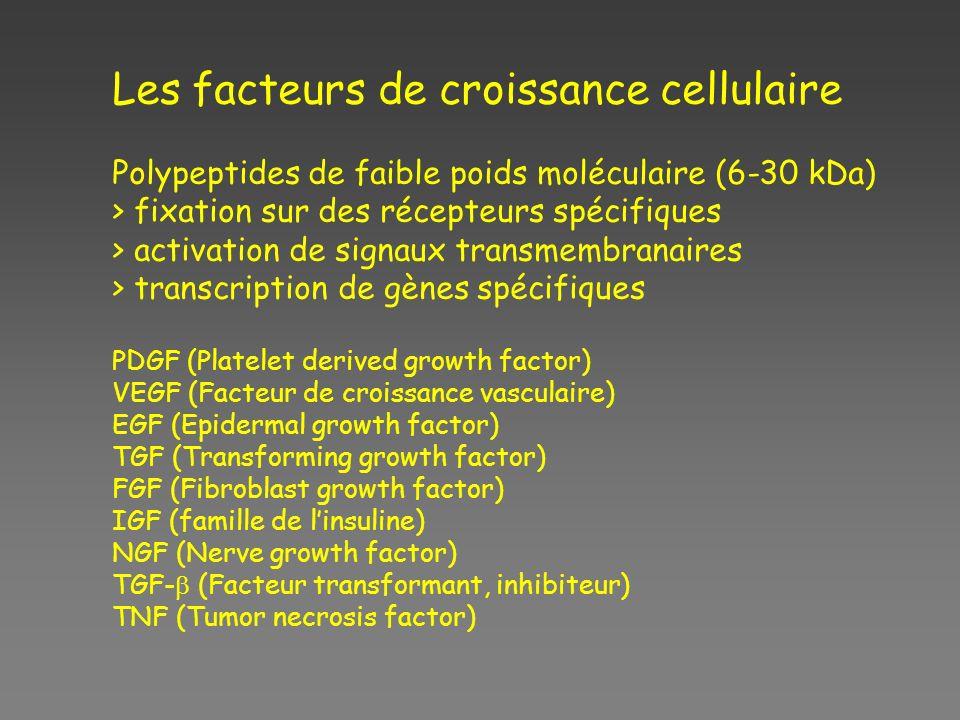 Les facteurs de croissance cellulaire Polypeptides de faible poids moléculaire (6-30 kDa) > fixation sur des récepteurs spécifiques > activation de si