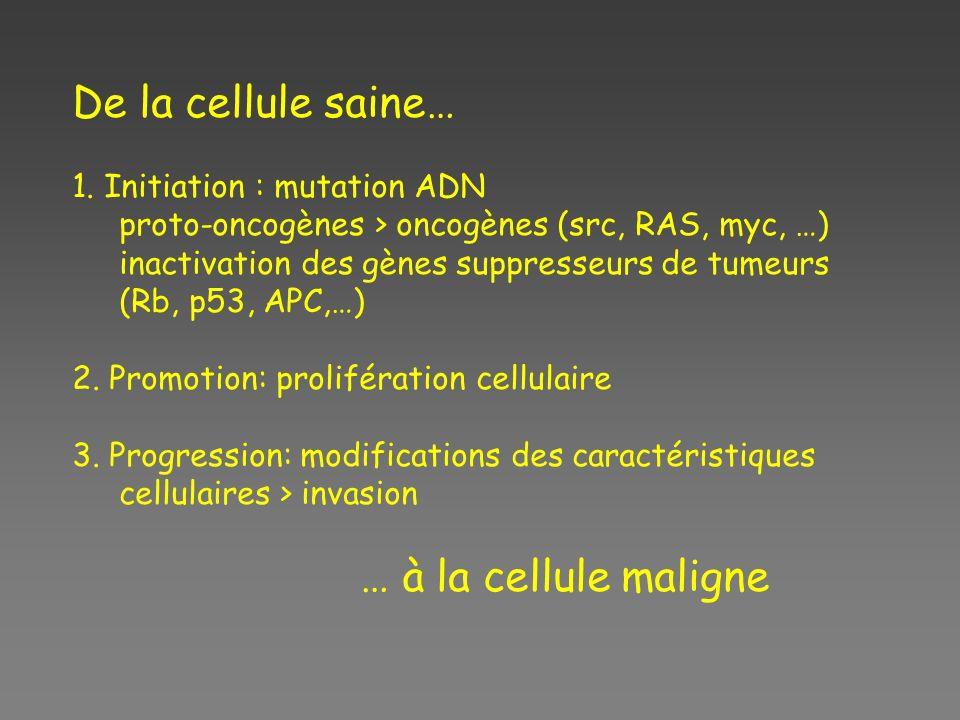 De la cellule saine… 1. Initiation : mutation ADN proto-oncogènes > oncogènes (src, RAS, myc, …) inactivation des gènes suppresseurs de tumeurs (Rb, p