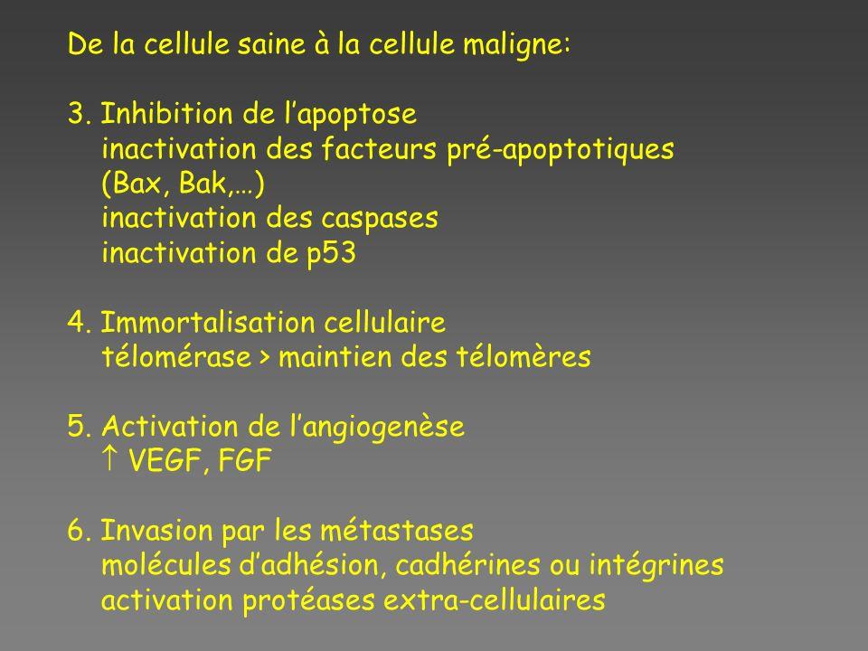 De la cellule saine à la cellule maligne: 3. Inhibition de lapoptose inactivation des facteurs pré-apoptotiques (Bax, Bak,…) inactivation des caspases