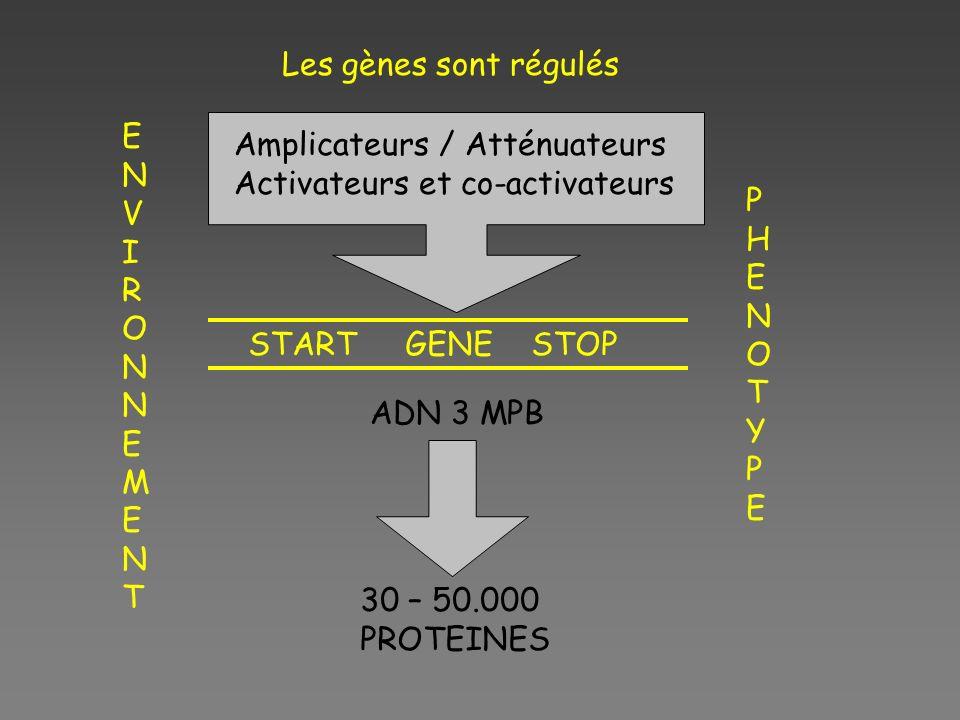 START GENE STOP 30 – 50.000 PROTEINES ENVIRONNEMENTENVIRONNEMENT PHENOTYPEPHENOTYPE Les gènes sont régulés ADN 3 MPB Amplicateurs / Atténuateurs Activ