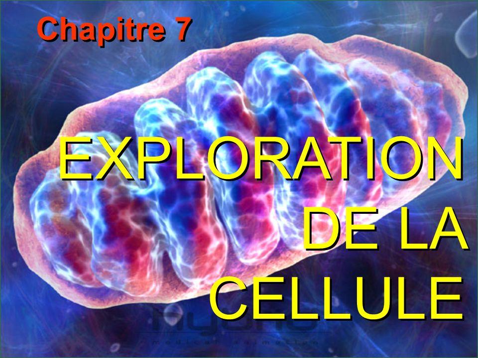 EXPLORATION DE LA CELLULE Chapitre 7