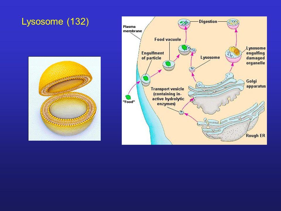 Lysosome (132)