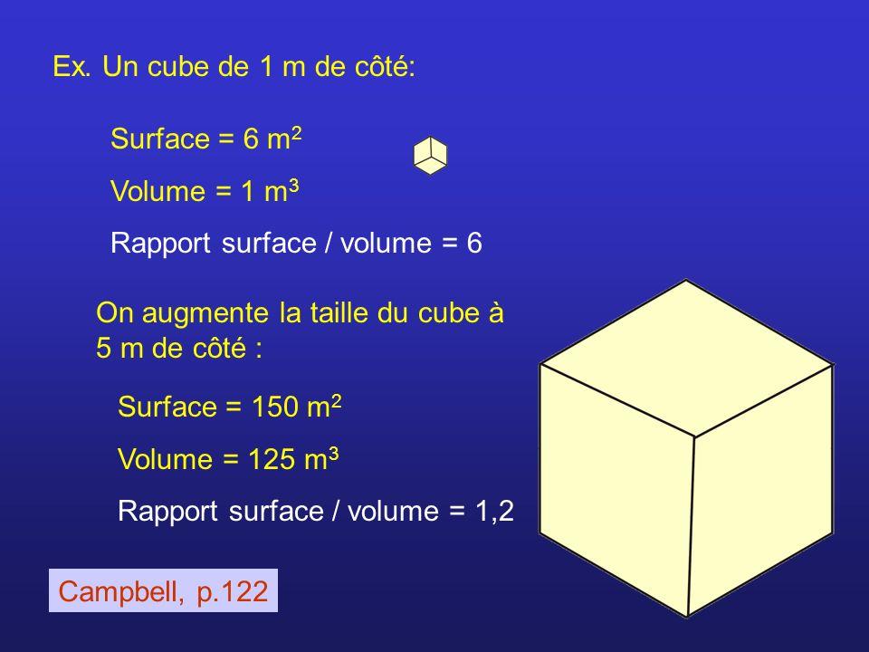 Ex. Un cube de 1 m de côté: Surface = 6 m 2 Volume = 1 m 3 Rapport surface / volume = 6 Surface = 150 m 2 Volume = 125 m 3 Rapport surface / volume =