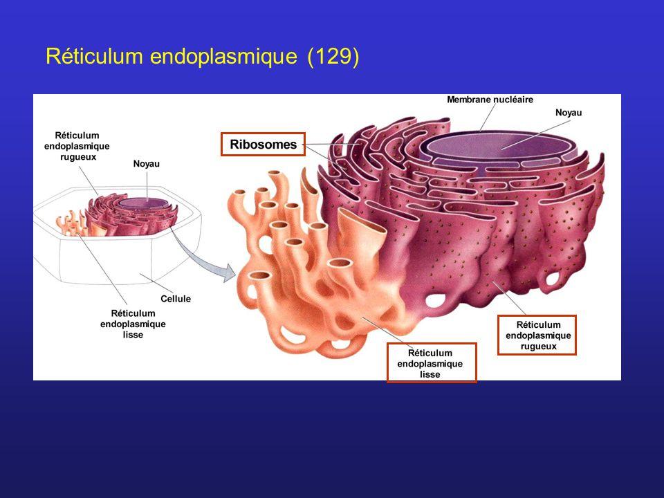 Réticulum endoplasmique (129)