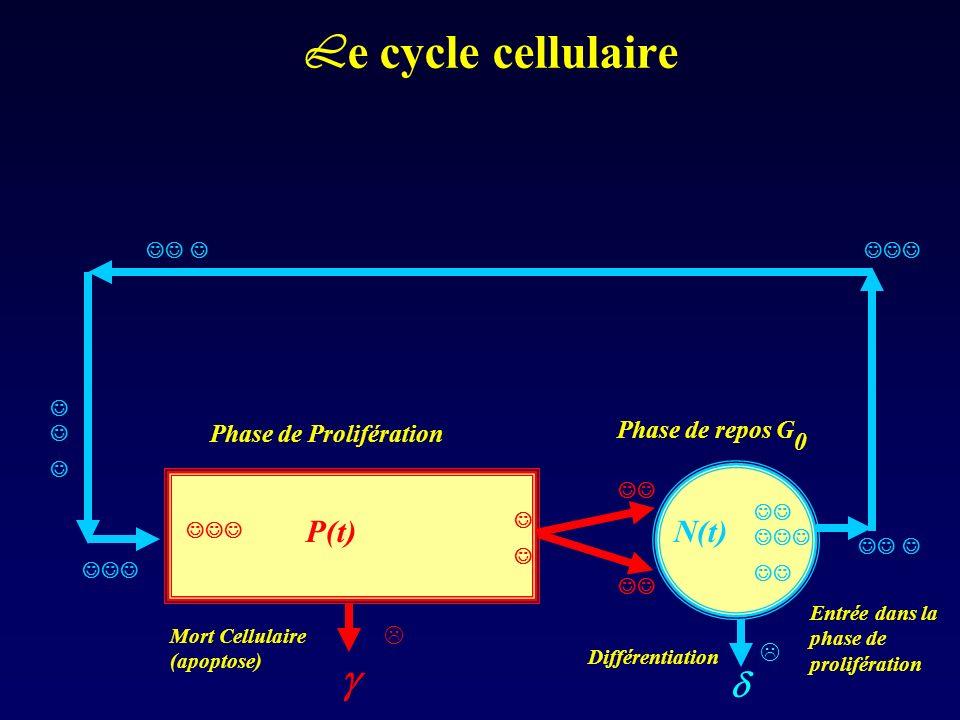 L e cycle cellulaire Phase de Prolifération Phase de repos G 0 N(t)P(t) Mort Cellulaire (apoptose) Différentiation Entrée dans la phase de proliférati