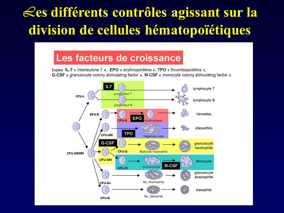 L es différents contrôles agissant sur la division de cellules hématopoïétiques