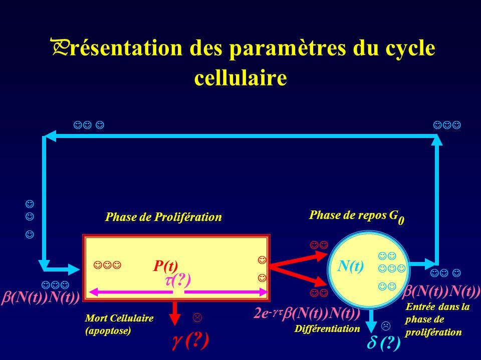 P résentation des paramètres du cycle cellulaire Phase de Prolifération Phase de repos G 0 (?) (N(t))N(t)) N(t)P(t) (?) Mort Cellulaire (apoptose) Dif