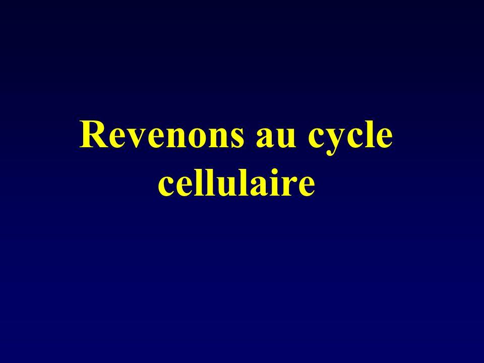 Revenons au cycle cellulaire