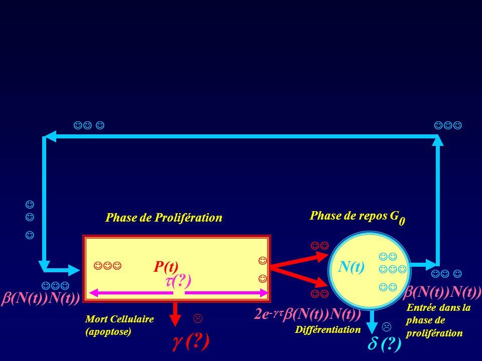 Phase de Prolifération Phase de repos G 0 (?) (N(t))N(t)) N(t)P(t) (?) Mort Cellulaire (apoptose) Différentiation Entrée dans la phase de prolifératio
