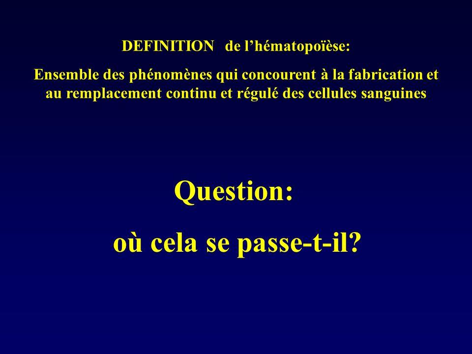L e cycle cellulaire Phase de Prolifération Phase de repos G 0 N(t)P(t) Mort Cellulaire (apoptose) Différentiation Entrée dans la phase de prolifération