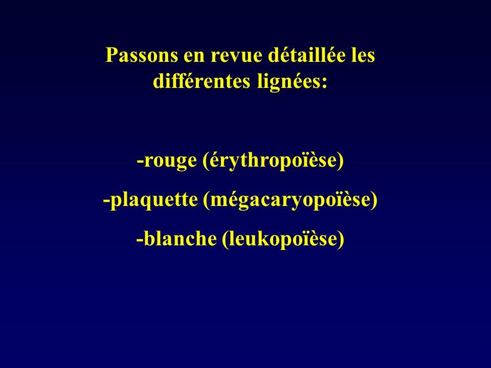 Passons en revue détaillée les différentes lignées: -rouge (érythropoïèse) -plaquette (mégacaryopoïèse) -blanche (leukopoïèse)