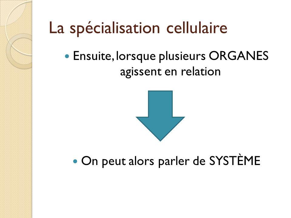 Ensuite, lorsque plusieurs ORGANES agissent en relation On peut alors parler de SYSTÈME
