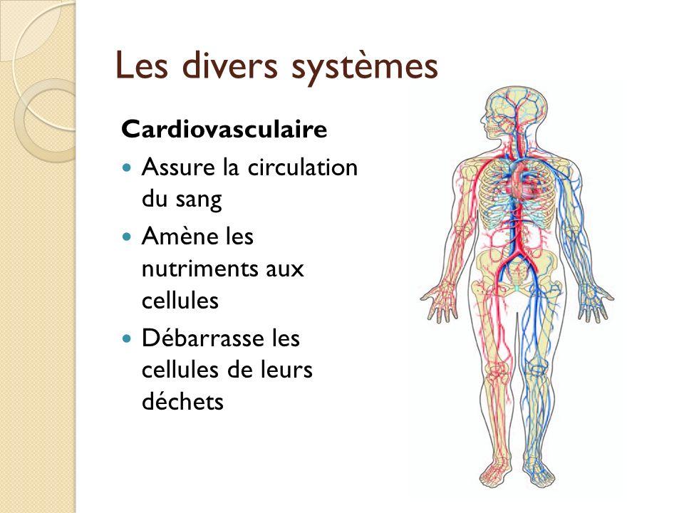 Les divers systèmes Cardiovasculaire Assure la circulation du sang Amène les nutriments aux cellules Débarrasse les cellules de leurs déchets