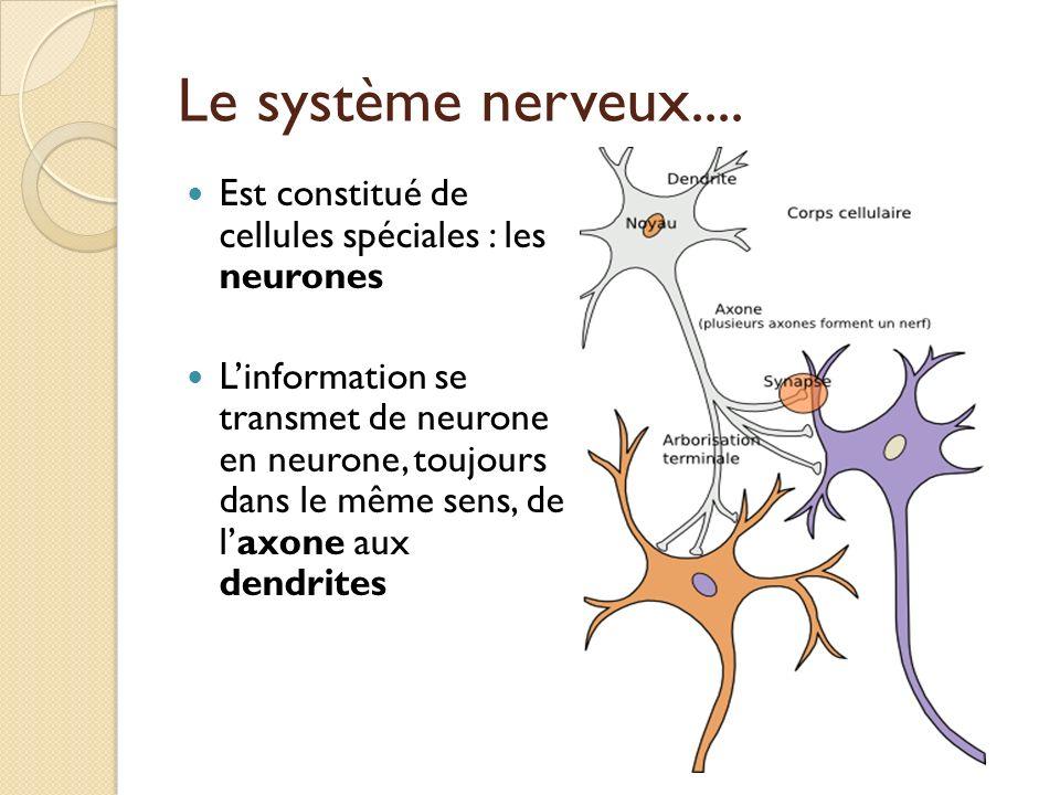 Le système nerveux.... Est constitué de cellules spéciales : les neurones Linformation se transmet de neurone en neurone, toujours dans le même sens,