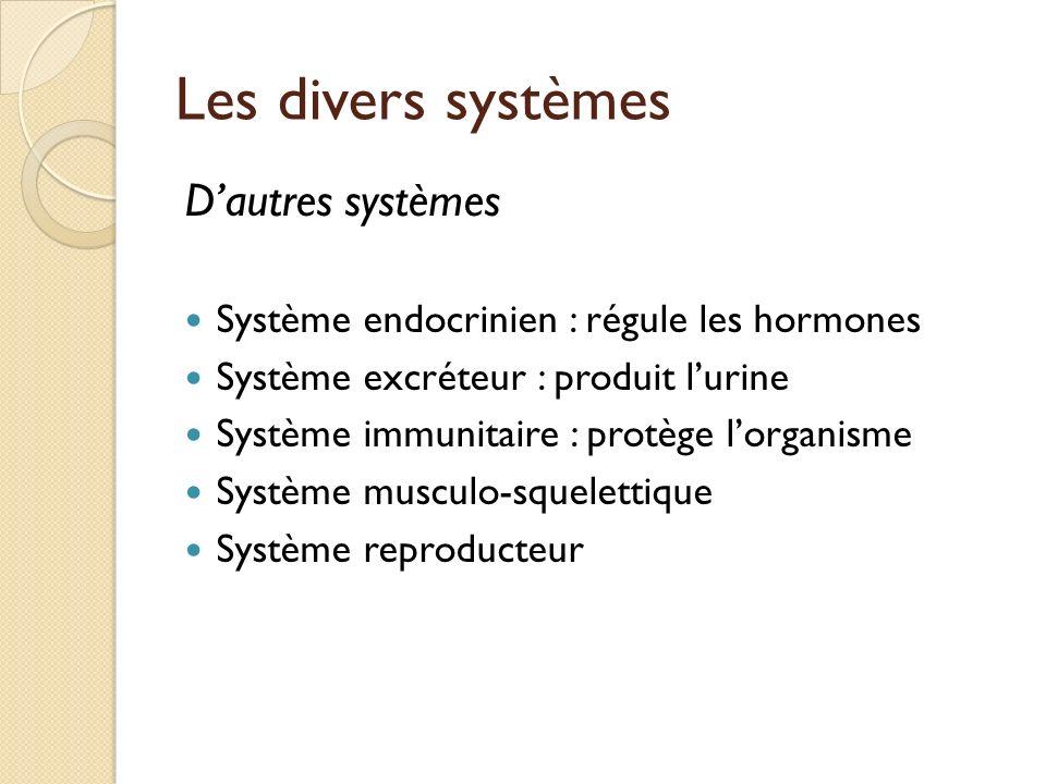 Les divers systèmes Dautres systèmes Système endocrinien : régule les hormones Système excréteur : produit lurine Système immunitaire : protège lorgan