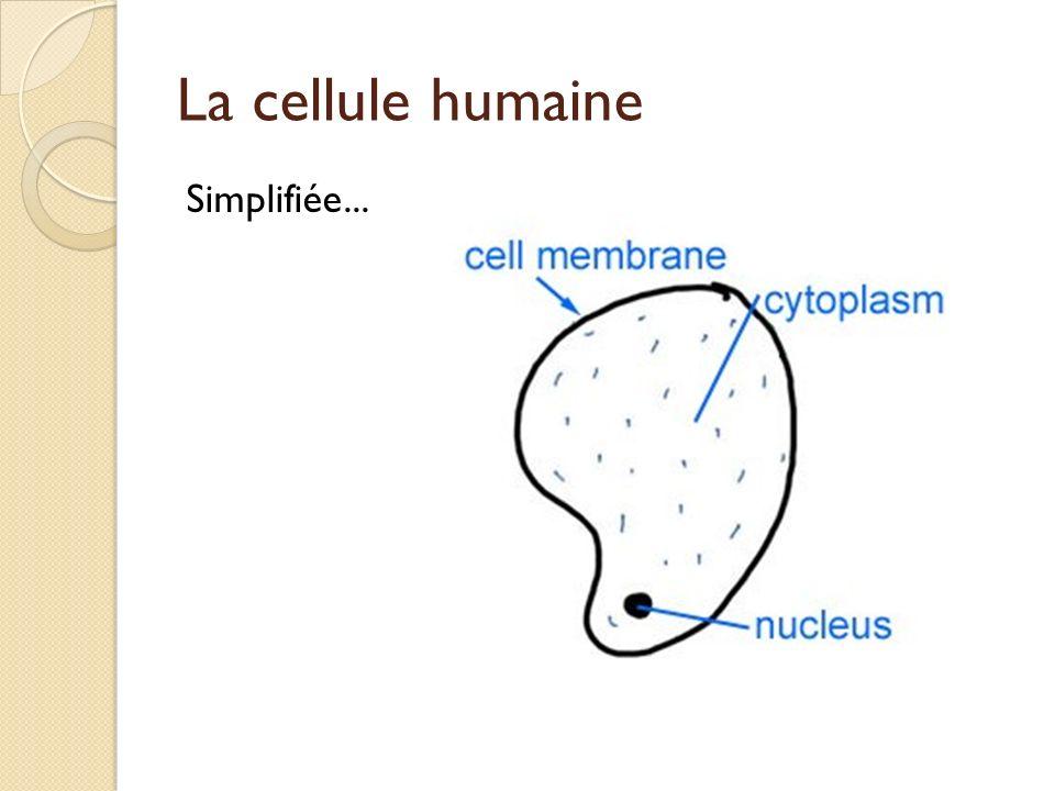 La membrane cellulaire Intrants DANS la cellule (ex. ?) Extrants HORS de la cellule (ex. ?)