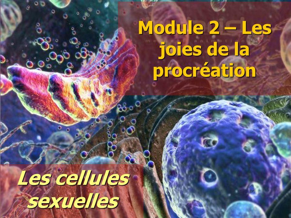 Module 2 – Les joies de la procréation Les cellules sexuelles