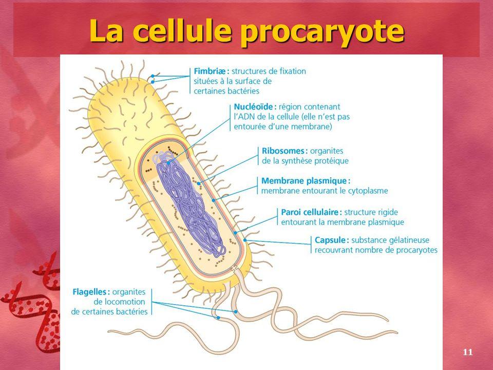 Collège Lionel-Groulx 11 La cellule procaryote