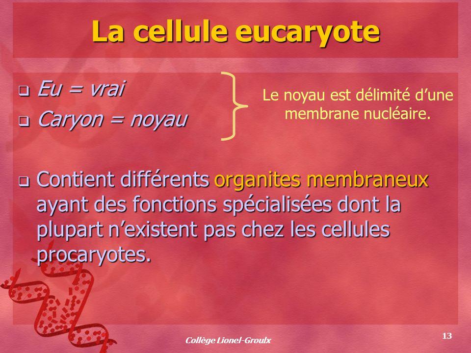 Collège Lionel-Groulx 13 La cellule eucaryote Eu = vrai Eu = vrai Caryon = noyau Caryon = noyau Contient différents organites membraneux ayant des fon