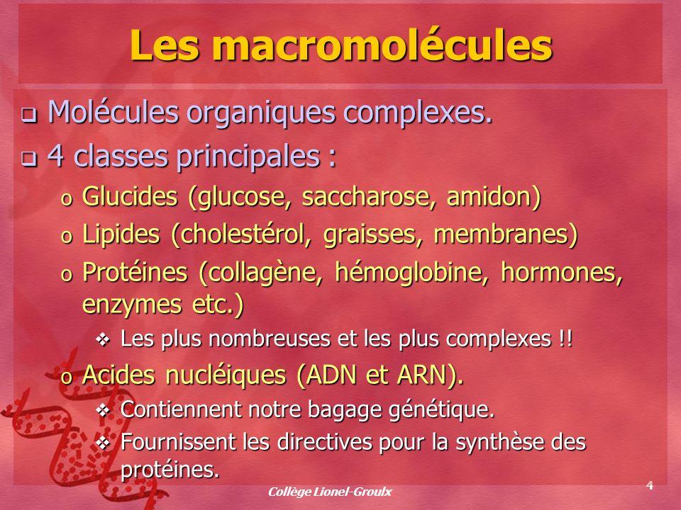 Collège Lionel-Groulx 4 Les macromolécules Molécules organiques complexes. Molécules organiques complexes. 4 classes principales : 4 classes principal