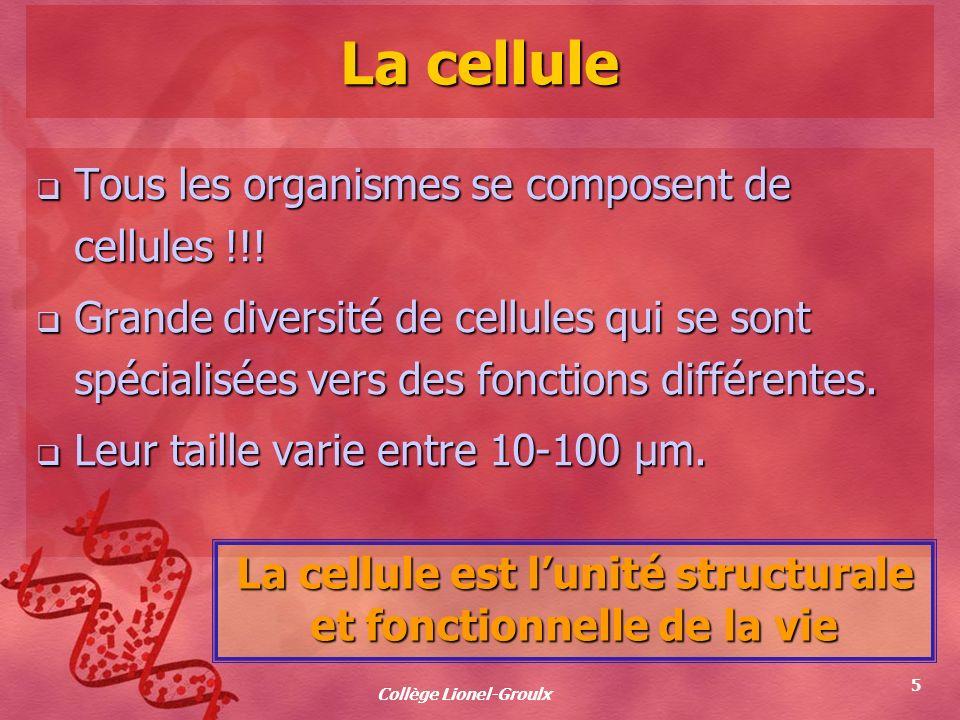 Collège Lionel-Groulx 5 La cellule Tous les organismes se composent de cellules !!! Tous les organismes se composent de cellules !!! Grande diversité