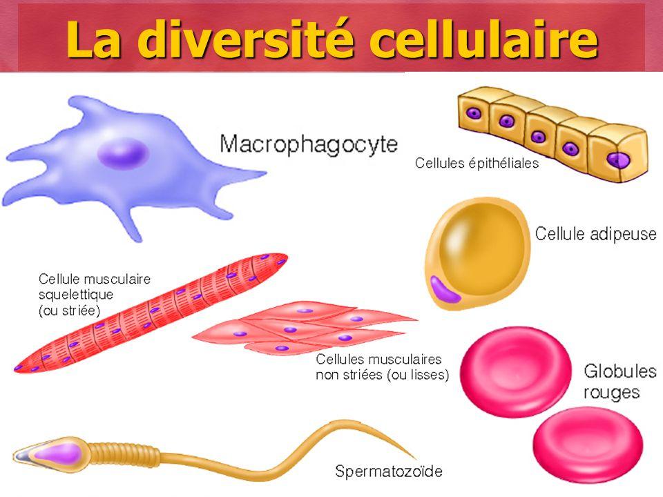 Collège Lionel-Groulx 6 La diversité cellulaire