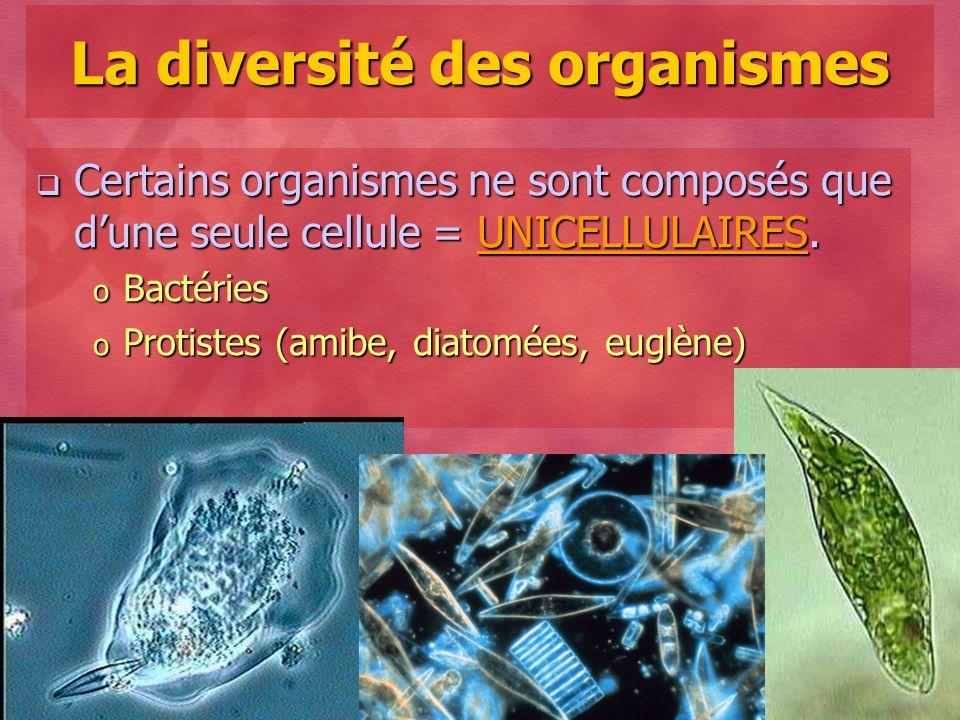 Collège Lionel-Groulx 7 La diversité des organismes Certains organismes ne sont composés que dune seule cellule = UNICELLULAIRES. Certains organismes