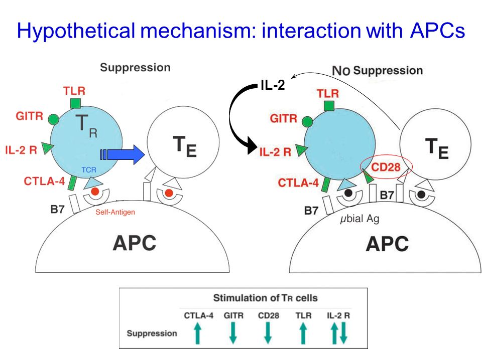 Master IL-2 Hypothetical mechanism: interaction with APCs