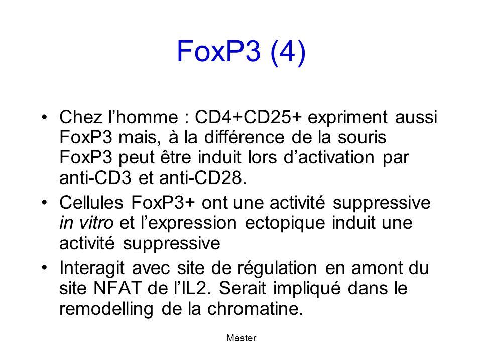 Master FoxP3 (4) Chez lhomme : CD4+CD25+ expriment aussi FoxP3 mais, à la différence de la souris FoxP3 peut être induit lors dactivation par anti-CD3 et anti-CD28.