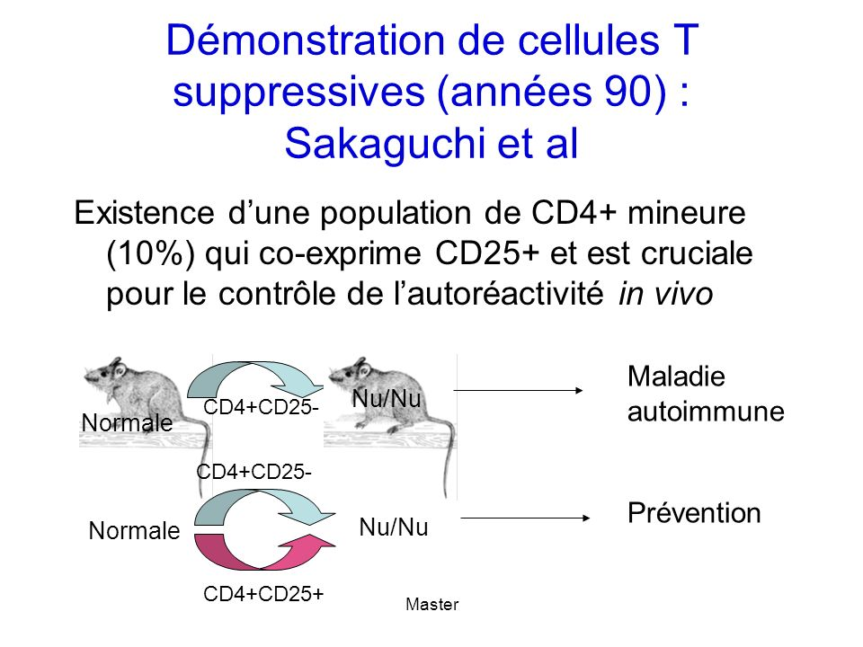 Master Démonstration de cellules T suppressives (années 90) : Sakaguchi et al Existence dune population de CD4+ mineure (10%) qui co-exprime CD25+ et est cruciale pour le contrôle de lautoréactivité in vivo Nu/Nu CD4+CD25- Maladie autoimmune Normale Nu/Nu CD4+CD25- Normale CD4+CD25+ Prévention