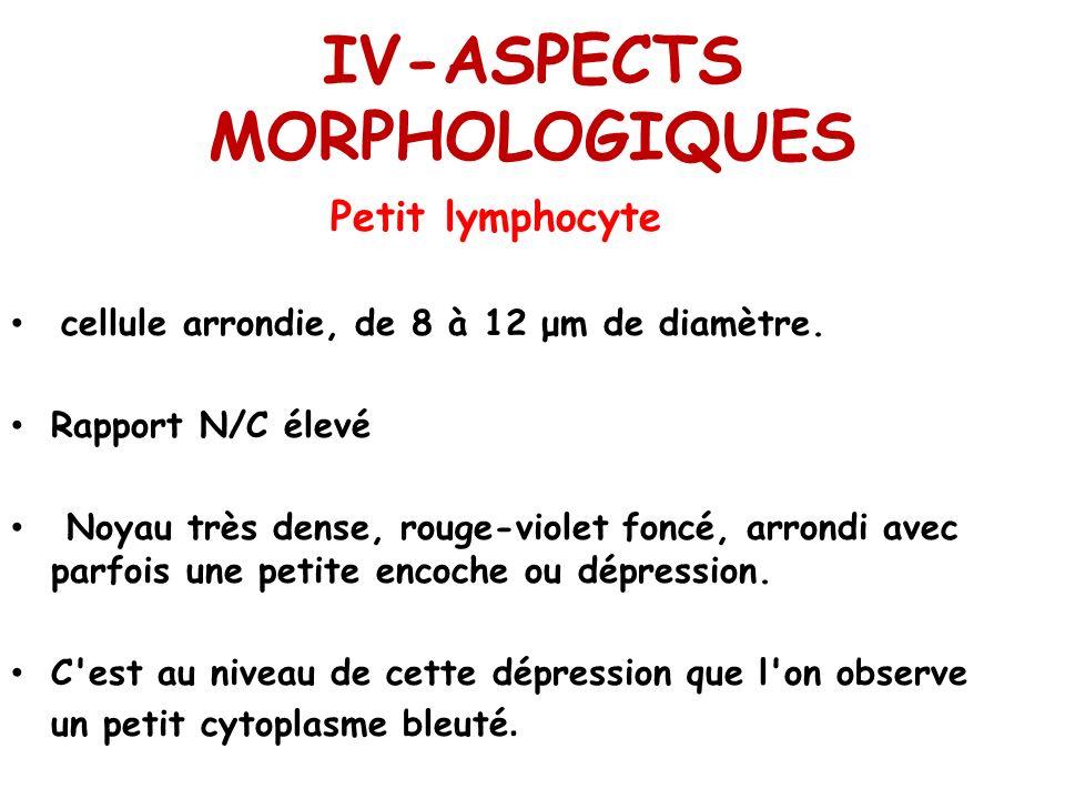 IV-ASPECTS MORPHOLOGIQUES Petit lymphocyte cellule arrondie, de 8 à 12 μm de diamètre. Rapport N/C élevé Noyau très dense, rouge-violet foncé, arrondi