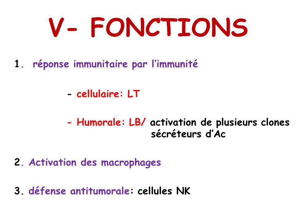 V- FONCTIONS 1. réponse immunitaire par limmunité - cellulaire: LT - Humorale: LB/ activation de plusieurs clones sécréteurs dAc 2. Activation des mac