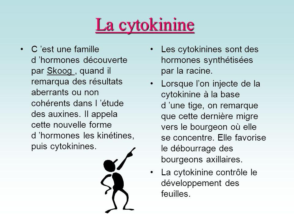 La cytokinine C est une famille d hormones découverte par Skoog, quand il remarqua des résultats aberrants ou non cohérents dans l étude des auxines.