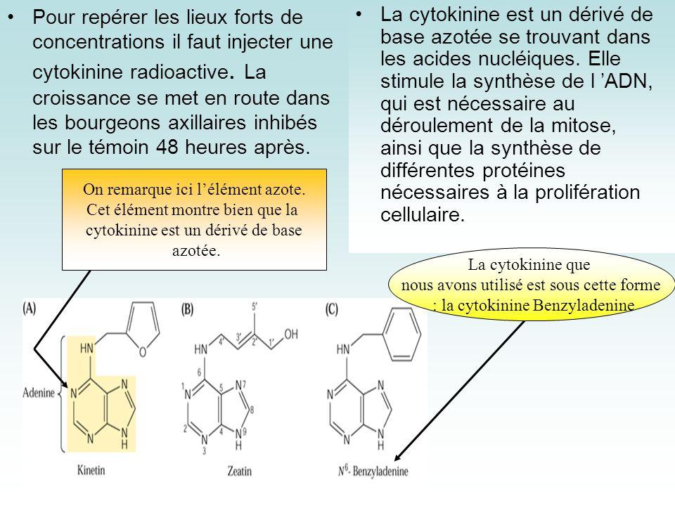 La cytokinine est un dérivé de base azotée se trouvant dans les acides nucléiques. Elle stimule la synthèse de l ADN, qui est nécessaire au déroulemen