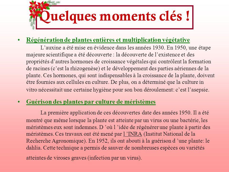Quelques moments clés ! Régénération de plantes entières et multiplication végétative Lauxine a été mise en évidence dans les années 1930. En 1950, un