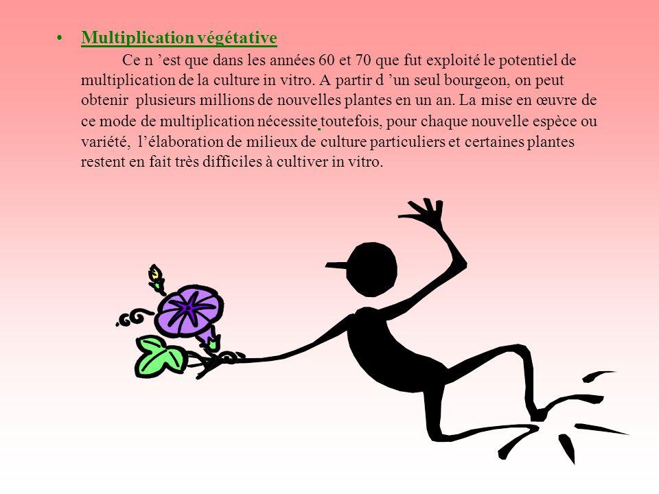 Multiplication végétative Ce n est que dans les années 60 et 70 que fut exploité le potentiel de multiplication de la culture in vitro. A partir d un