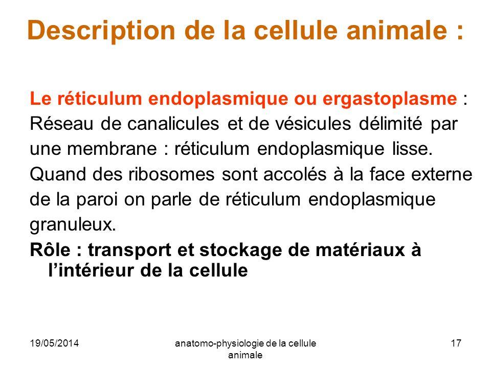 19/05/2014anatomo-physiologie de la cellule animale 17 Description de la cellule animale : Le réticulum endoplasmique ou ergastoplasme : Réseau de can