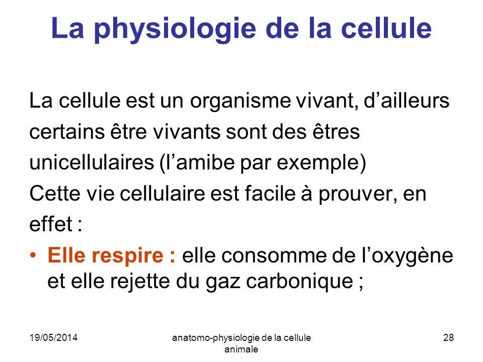 19/05/2014anatomo-physiologie de la cellule animale 28 La physiologie de la cellule La cellule est un organisme vivant, dailleurs certains être vivant