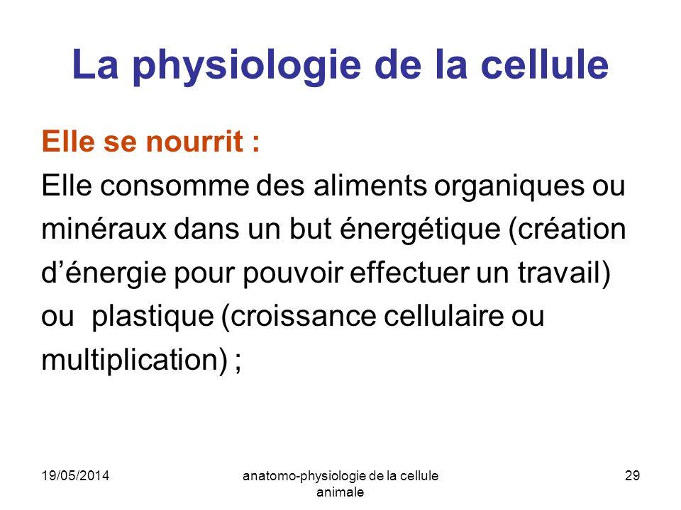 19/05/2014anatomo-physiologie de la cellule animale 29 La physiologie de la cellule Elle se nourrit : Elle consomme des aliments organiques ou minérau