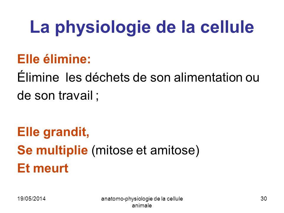 19/05/2014anatomo-physiologie de la cellule animale 30 La physiologie de la cellule Elle élimine: Élimine les déchets de son alimentation ou de son tr